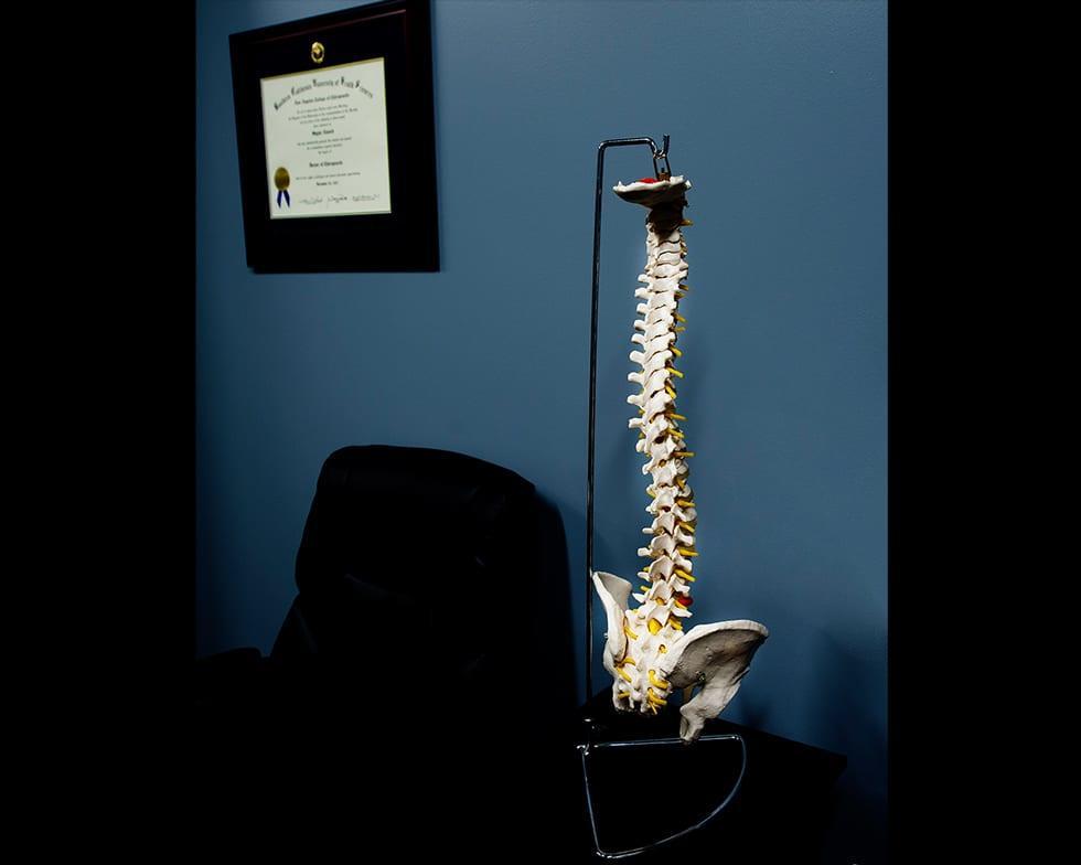 ecw-spine-model